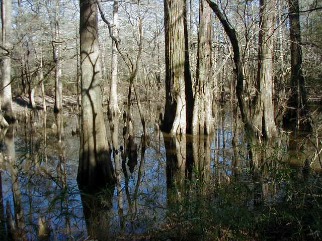 The Big Thicket of East Texas