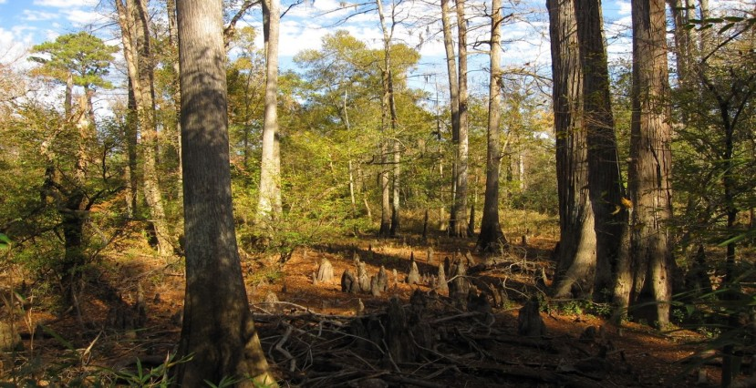 Big Thicket of Texas